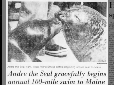 Andre the Seal Swims to Maine
